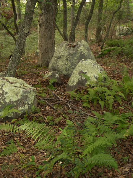 Lichens-covered Boulders and ferns in Kettle Pond State Park