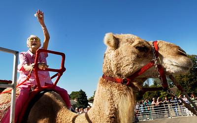 9-16_Lachat_camel_2.jpg