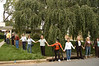 200 year old weeping cherry tree--Protesters form a ring around the tree.