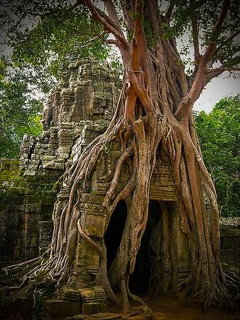 Angkor Thom - Overgrowth