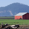 red barn. Skagit Valley, Washington.