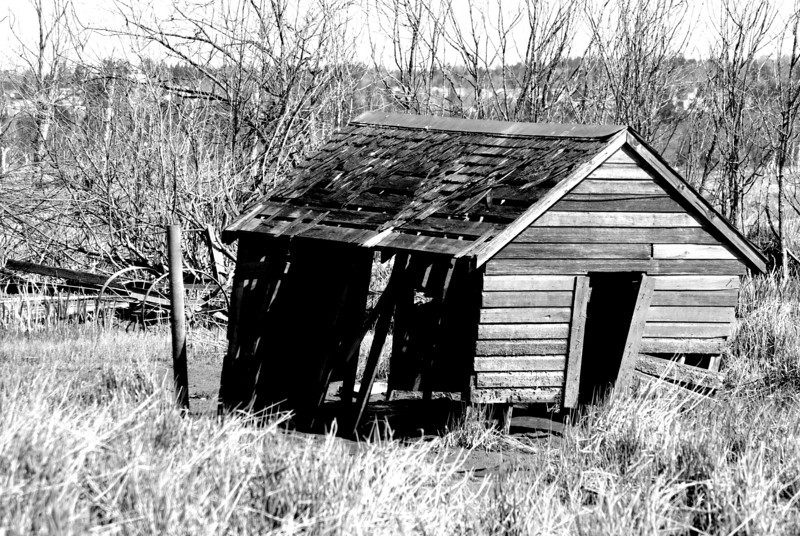 abandoned cabin. Smith Island, Everett, washington