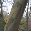 Arboretum, Fall 2008