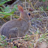 bunny at Cama Beach State Park, Washington