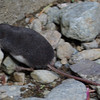 a shrew on the banks of Money Creek