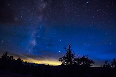 Milky Way above the Ancient Forest