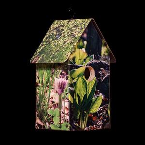 Habitats: Forest Floor Birdhouse