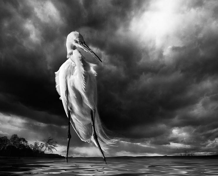 Epic Egret