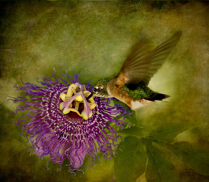 Passion and the Hummingbird