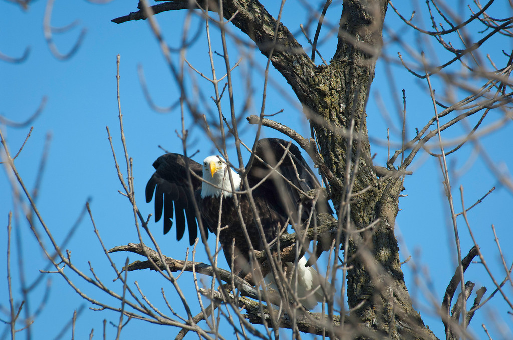 Eagles - Rock River - Dixon, Il