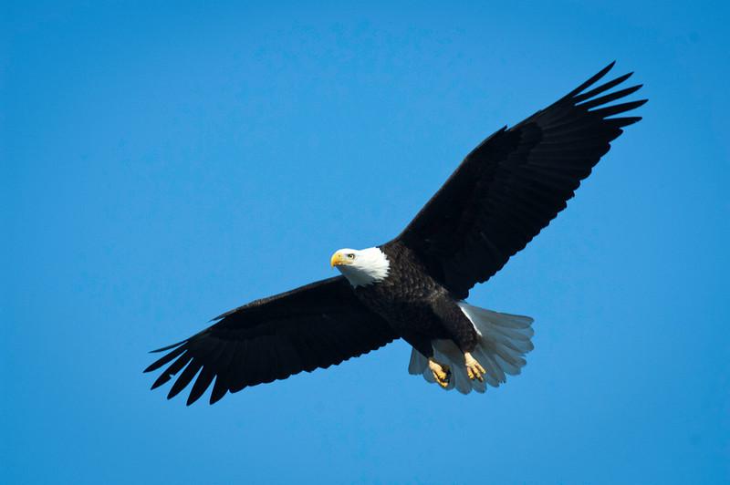 Eagles - Rock River - Dixon, Il