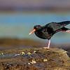 Shorebird Calesthenics
