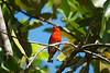 Birds of Madagascar :