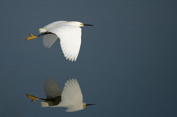 Birds of Shoreline