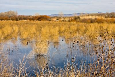 Birds at Bosque del Apache