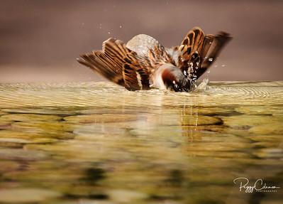 Bird Bath!