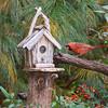 Male Northern Cardinal, Cardinalis cardinalis, at Birdhouse.