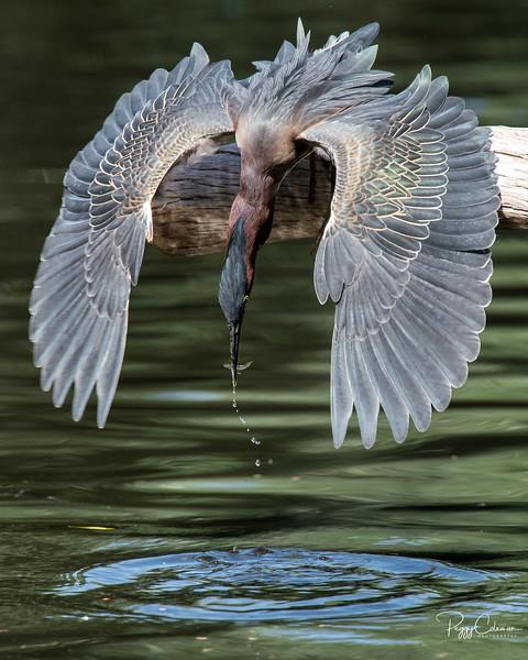 The 2015 Audubon Top 100