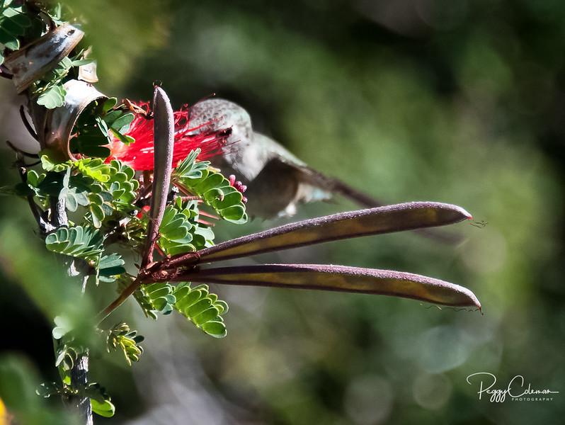 Hummingbird in Seuss's hand!
