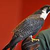 birding-festival-2012-093