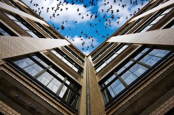 Birds in a Blue Berlin Sky