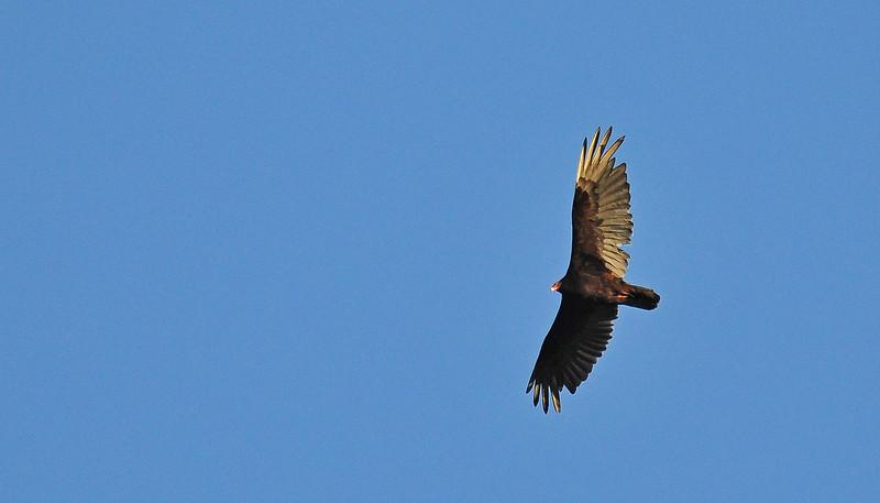 birding-festival-2012-061b