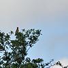 birding-festival-2012-38