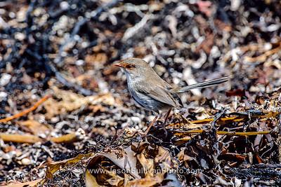 Seaweed Perched