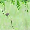birding-festival-2012-061c