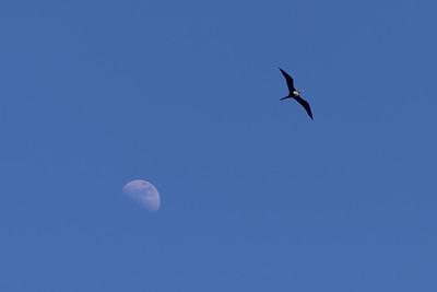 """Stealing The Moon"" ('Iwa -- Frigata minor)"