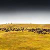Bison-Roundup-Pano-Ridgeline