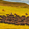 BisonRoundup_Sep272013_2441