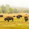Morning Fog-BisonRoundup_Sep262013_1147
