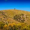 BisonRoundup_Sep262013_1403-Lone Cowboy On Ridge