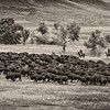 Bison-Roundup-Pano-NoVehicles-WarmTonePaper
