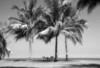 JimmyChew_FineArt_ClubMed_infrared copy 2