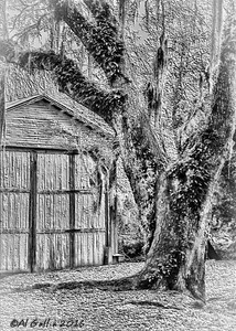 """'Two Old Buddies II'; 100 year old boat house amd guardian oak at Avery Island Jungle Garden, Louisiana. """"...Time is like a rairoad train, A one-way ticket - no turning back. And the prayer of every passenger is to stay securely on the track..."""" Excerpt from Where Did All the Decades Go by John & Edna Massimilla. ©Al Gallia"""