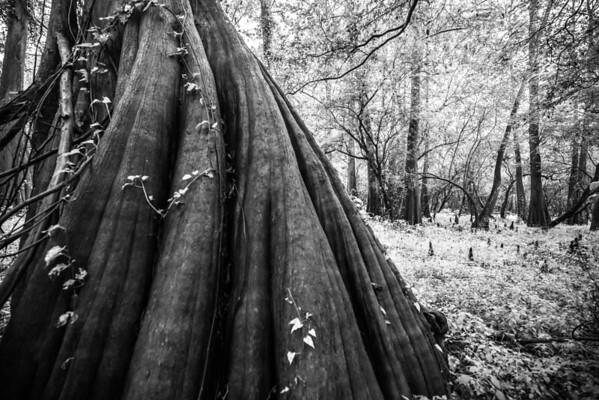 Cypress Trees_Cat Island_Louisiana_photo by Gabe DeWitt_November 05, 2014-52