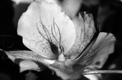 B&W Flower Study #1