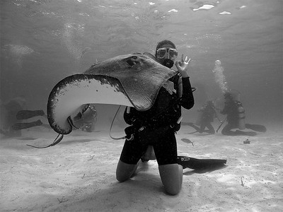 Stingray and a diver