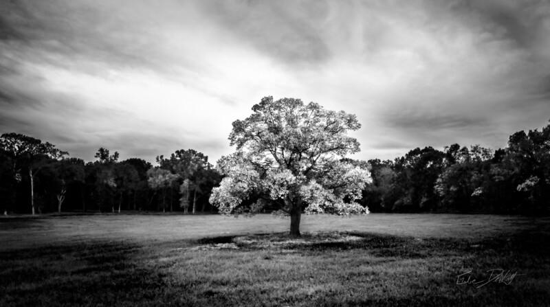 Country Side_Louisiana_photo by Gabe DeWitt_November 05, 2014-2