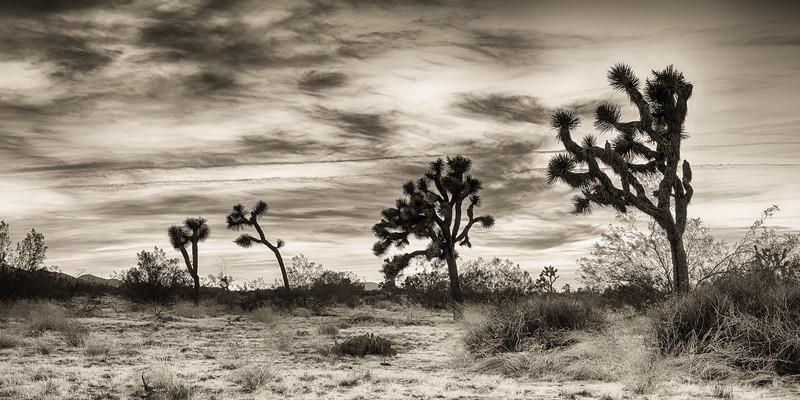 Joshua Tree-0126_HDR-Silver.jpg