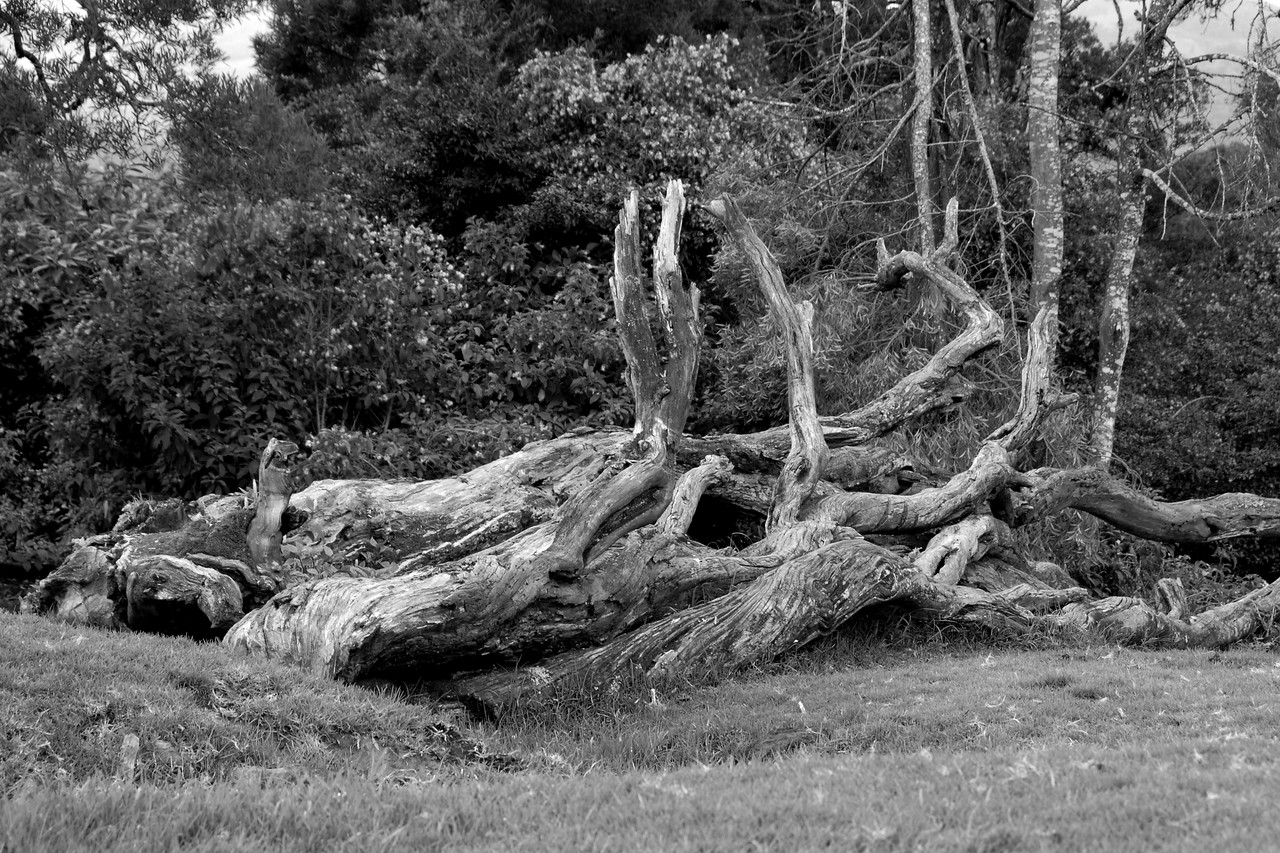 Abstract tree trunk at Filmy Point. Ooty, Tamil Nadu, India July 2007