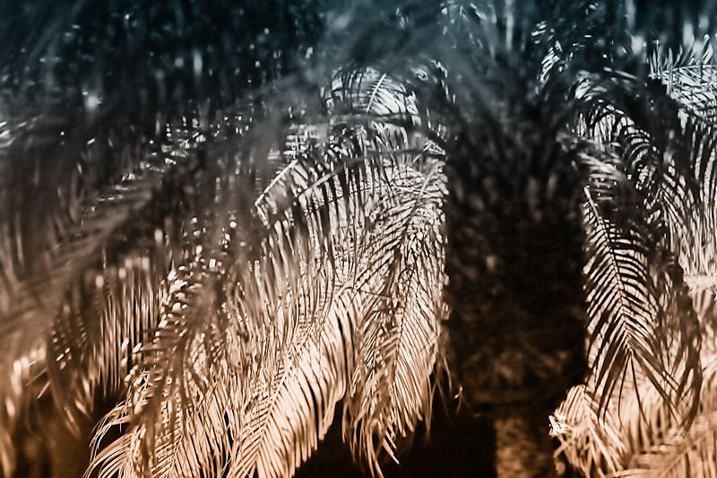 Disco Palm