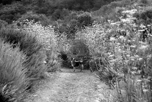Luna_trail