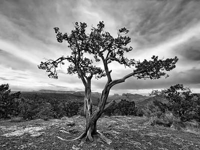 Lone Tree in Sedona