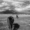 Horse shadow.
