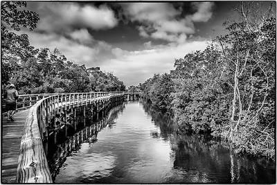 Robinson Mangrove Walkway