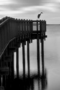 Mr Heron