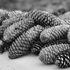 9-23-2020: A pile o' pinecones